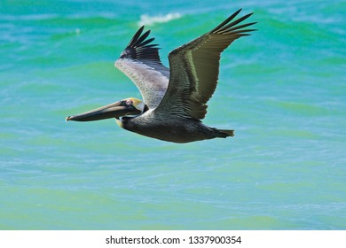 Flying with pelican
