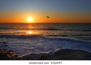 Flying pelican against setting sun; La Jolla, California