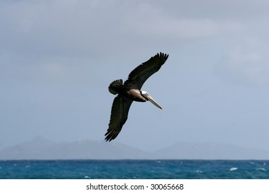 a flying pelican with the island of st Barths in the background