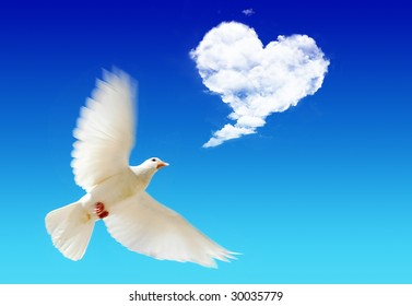 Flying pigeon in the blue sky with a sky heart