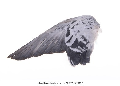Flying pigeon wings on a white background