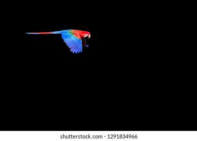 Flying Red And Green Macaw, Ara Chloropterus, Buraco Das Araras, near Jardim and Bonito, Pantanal, Mato Grosso do Sul, Brazil, South America