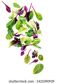 Flying Salad Leaves isolated on white background. Fresh mixed salad with arugula, lettuce, spinach and beets leaf.