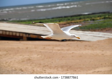 Flying seagull at the beach