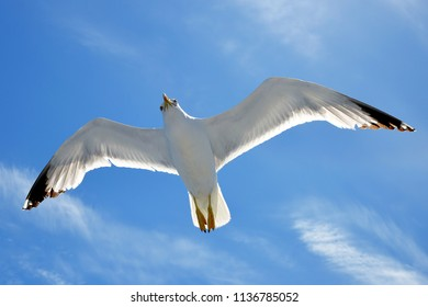 Flying seagull with blue sky in the background.
