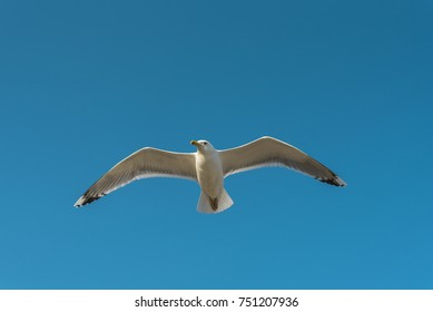 Flying seagull in the blue sky, set