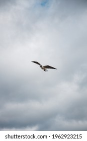 flying seagull in cloudy sky