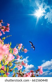 flying seagull and flowers over sunny blue sky