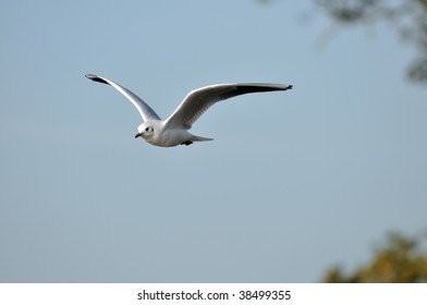 Flying seagull in nature park