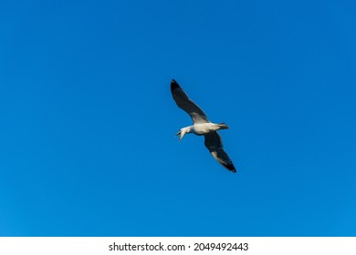 Flying seagull over the Mediterranean sea.
