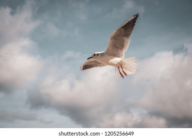 Flying seagull in the sky with clouds