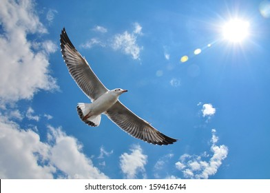 flying seagull in sky with clouds and bright sun