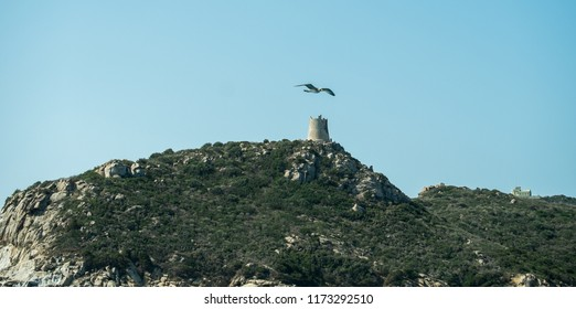 Flying Seagull in the Sky of Villasimius, Cagliari, Sardinia