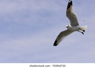 flying seagull in spain