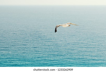 Flying seagull, top view silhouette. Bird flies over the sea. Seagull hover over deep blue sea. Gull hunting down fish. Gull over boundless expanse air. Free flight.