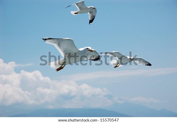 flying-seagulls-600w-15570547.jpg