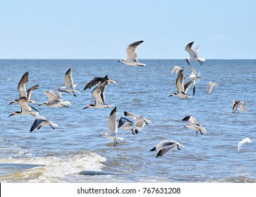 Flying seagulls above the water along the beach