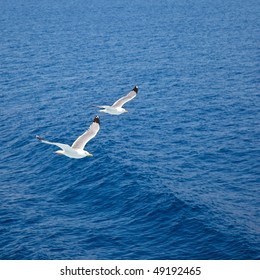 Flying seagulls over blue water background