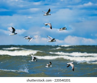 Flying seagulls over surface of the sea