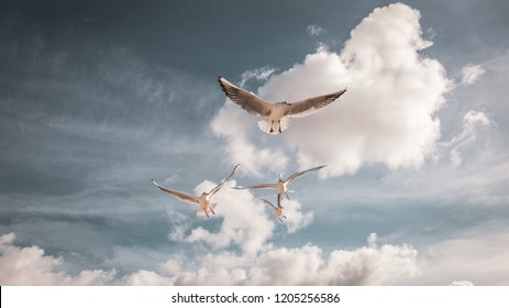 Flying seagulls in the sky with clouds