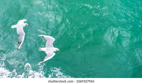 Flying seagulls, top view silhouette. Bird flies over the sea. Seagulls hover over deep blue sea. Gull hunting down fish. Gull over boundless expanse air. Free flight.