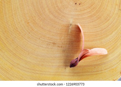 flying seed plant on wooden texture background.