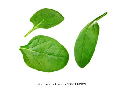 Flying spinach leaves on a white background. toning. selective focus