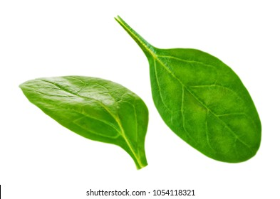 Flying spinach leaves on a white background