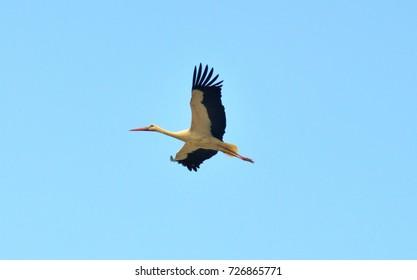 flying stork...