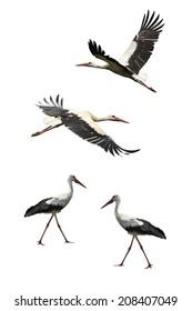 Flying stork isolated on white background