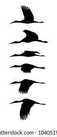 Flying storks