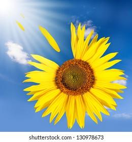 flying sunflower