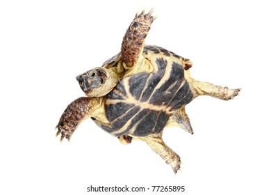 Flying turtle on a white background