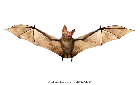 Flying Vampire bat isolated on white background,