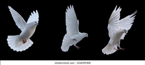 224.349 hình ảnh về chim bồ câu đẹp tuyệt, thích hợp cho in ấn thiết kế của riêng bạn