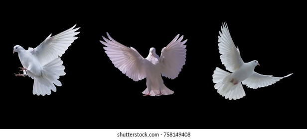 Flying white doves on a black background