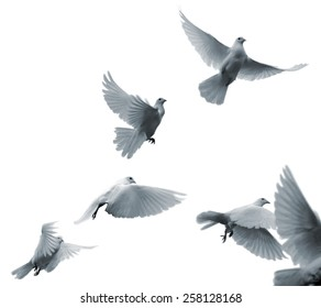 Flying white pigeons