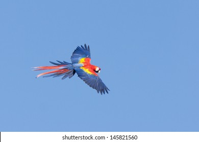 flying wild macaw parrot