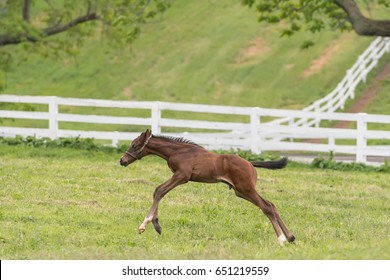 Foal Bursts Forward with Speed over grassy field