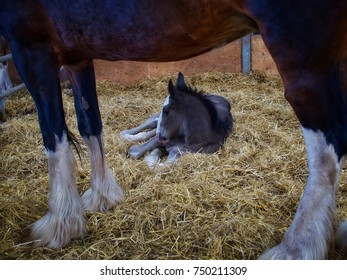 Foal and Filly