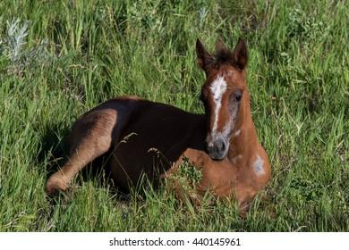 Foal in Grass