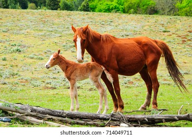 foal and mare horses in Hogsback, South Africa.