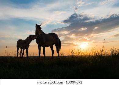 foal and mare - two horses at sunset