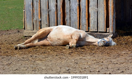 Foal on pasture in summer - Shutterstock ID 1999331891