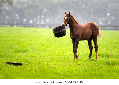 A foal playing with food inside pasture