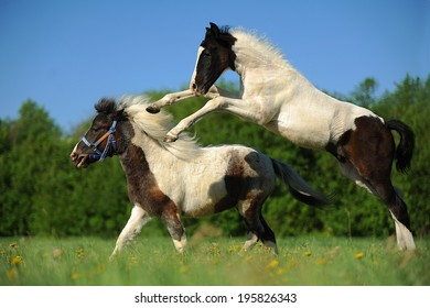 foal plays jumping jumps