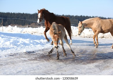 Foal slipping on ince
