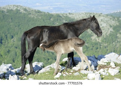 Foal suckled milk