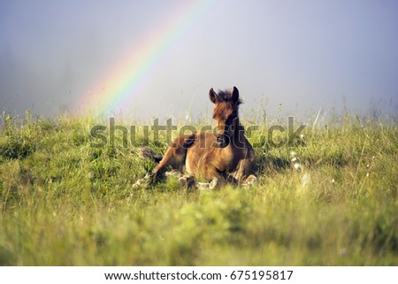 Foal young teenager resting