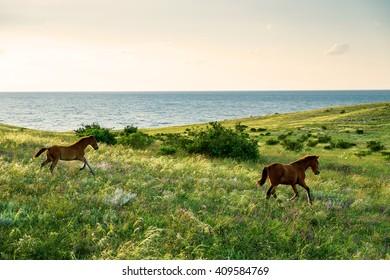 foals running field sunset